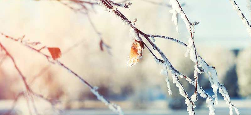 capteurs newsteo résiste au froid